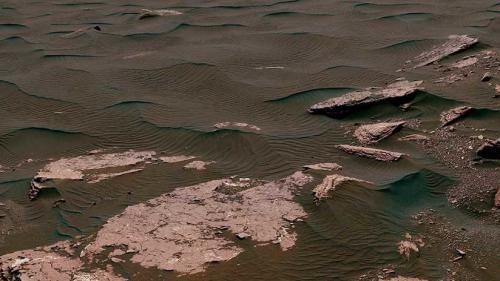 ¿Qué especie que habita en la Tierra puede vivir en Marte?