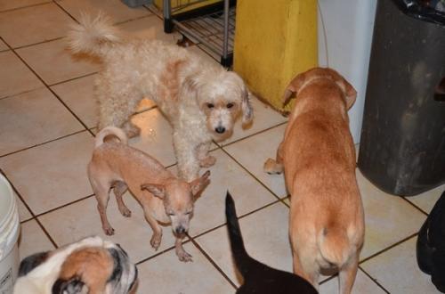 FRYAM abre acopio para damnificados y mascotas