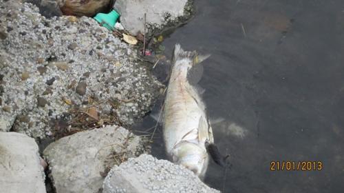 Detectan  mortandad de peces en la Laguna del Carpintero