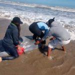 Policías encuentran otro delfín en Matamoros