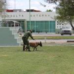 Ejército cuenta con apoyo de escuadrón canino